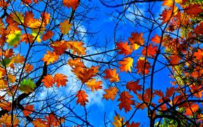 Природа: осень, небо, ветки, листья, природа
