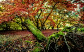 Природа: осень, деревья, лес, природа