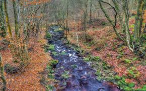 Природа: осень, лес, деревья, река, природа