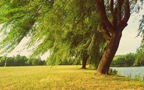 поле, деревья, река, пейзаж обои, фото