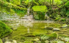 Природа: лес, деревья, скалы, природа