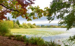 осень, озеро, деревья, пейзаж обои, фото