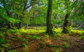осень, парк, деревья, пейзаж обои, фото