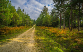 осень, лес, дорога, деревья, пейзаж обои, фото
