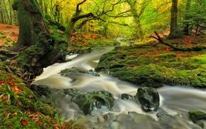 Обои Природа: осень, лес, река, деревья, природа