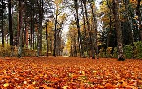осень, парк, деревья, дорога, пейзаж обои, фото