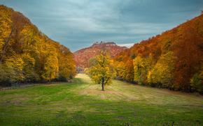 Обои Пейзажи: осень, поле, деревья, горы, пейзаж