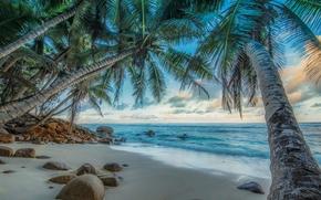 Обои Пейзажи: Seychelles, море, пальмы, берег, камни, пейзаж