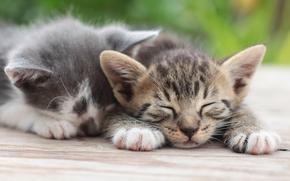 Животные: котята, парочка, отдых, сон