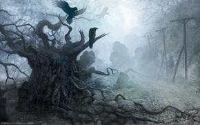 Игры: камни, вороны, мрак, рисунок