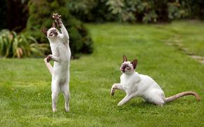 животные, коты, мышь, tamara patrejeva, игра обои, фото