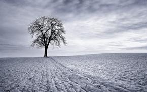pole, drzewo, niebo, zima