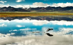 китай,  тибет,  горы обои, фото