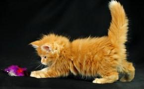 кошка,  кот,  котенок,  котэ,  рыжий,  маленький,  играет обои, фото