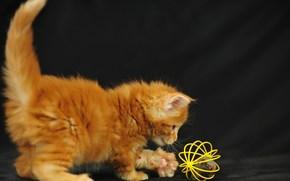 кошка,  котёнок,  малыш,  игра обои, фото