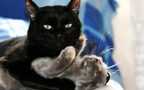 черный кот, кошка, котенок, любовь, игры, объятия обои, фото