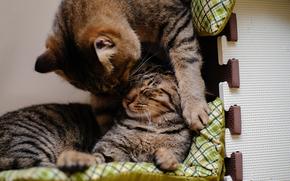 кошки, коты, спят, играют обои, фото