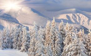 zima, nieg, las, krajobraz