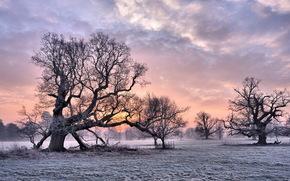 дерево, закат, зима обои, фото