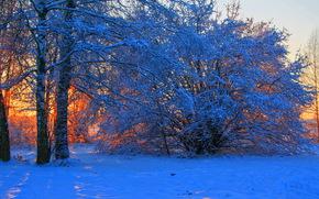 Зима, закат, Снег, Деревья, Ветки обои, фото