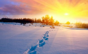 зима, снег, следы, поле, деревья, холод, солнце, закат, небо, природа обои, фото
