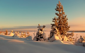 зима, деревья, ели, закат, солнце, снег, сугроб обои, фото