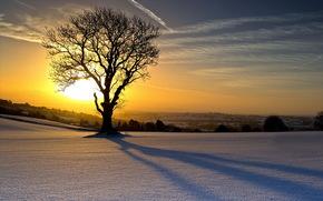 закат, зима, дерево обои, фото