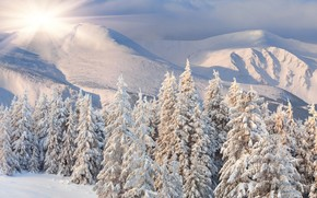 hills, wit, Hills, soce, las, nieg, zima