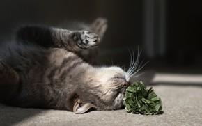 кошка, кот, игра, на полу, цветок обои, фото
