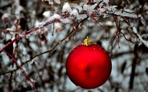 шар, красный, шарик, елочная, игрушка, ветка, лед, зима, Новый Год, Новый год обои, фото