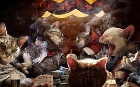 коты, карты, игра обои, фото