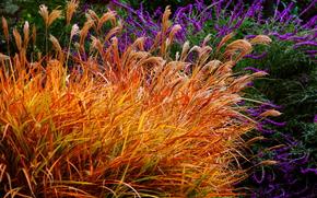 herbe, plantes, Fleurs, nature