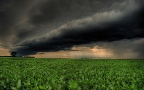 storm, rolling, over, bean, field, dark, Clouds, rain