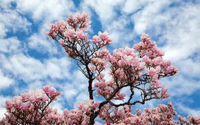 ciel, arbre, BRANCH, Fleurs, nature