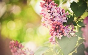 wallpaper, Flowers, Widescreen, SPRING, lilac, purple