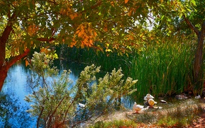 pond, trees, Duck, landscape