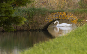 river, swan, white, bridge