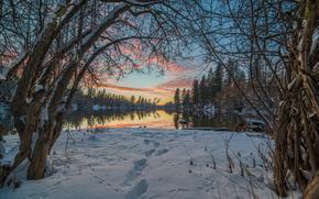 natură, cer, copaci, peisaj, zăpadă, RAMURA, iarnă, urme