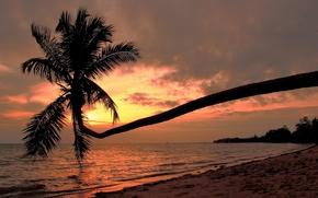 Tailanda, plajă, coastă, apus de soare, palmier, Koh Phangan, Golful Thailandei