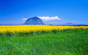 luncă, Flori, domeniu, munte, cer, nori