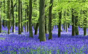pădure, vară, copaci, Flori, trunchiuri
