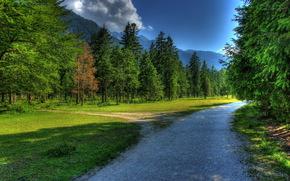 nori, rutier, pădure, iarbă, cer, natură