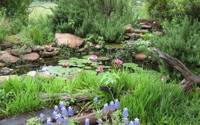 park, pond, nature