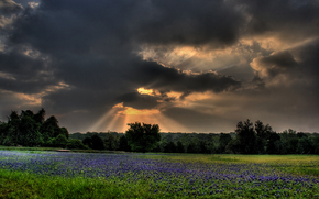 field, CLOUDS, trees, landscape, sunset