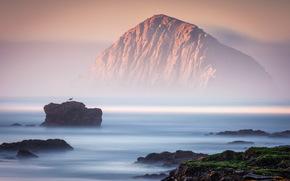 pájaro, mar, paisaje, Rocas, niebla