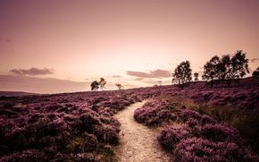 rutier, Anglia, Derbyshire, domeniu, copaci, peisaj, plante, seară, cărare, natură, Heather