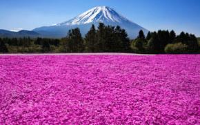 natură, Fuji, Japonia, munte, vulcan