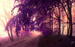 кроны, деревья, листья, дорога, фиолетовый, лес