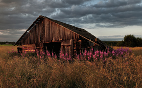 трава, дом, цветы, заброшенный, старый