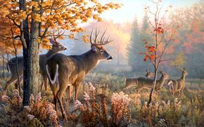 олени, животные, картина
